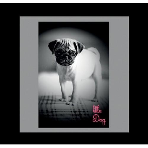COUSSIN  pug puppy- 50 x 50 cm