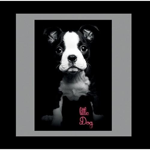 COUSSIN  boston terrier- 50 x 50 cm